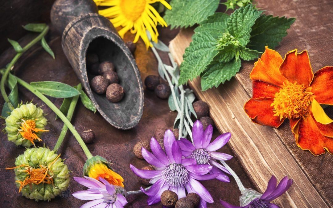 Les plantes médicinales : la médecine naturelle